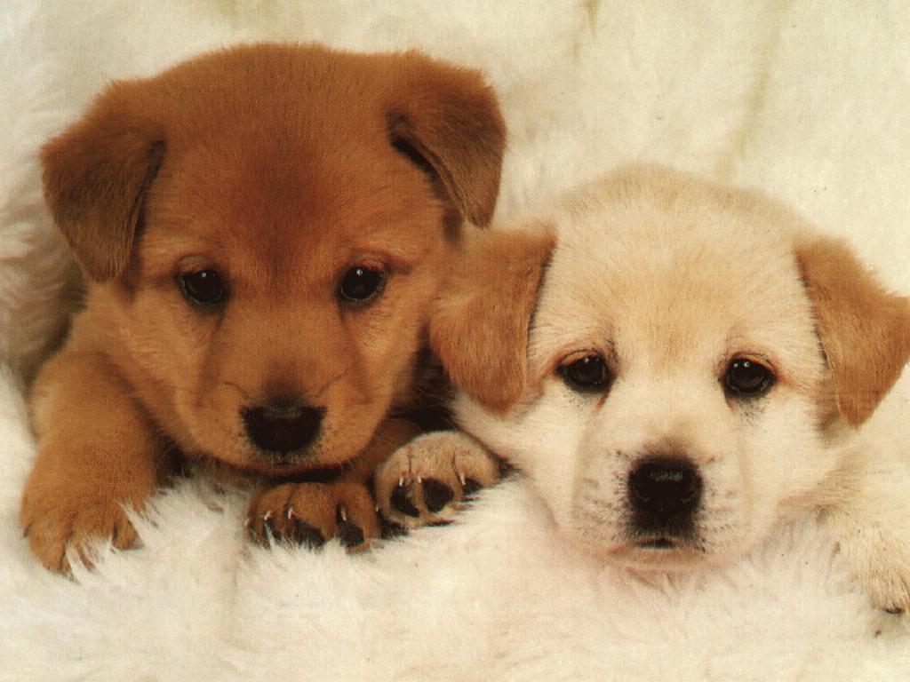 dog-2puppys-animal21